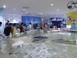 Osaka, aquarium Kaiyukan - Autour de Marine
